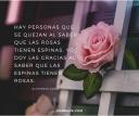 flower_rose