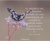 flower&farfalle-1