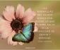 flower&farfalle-2