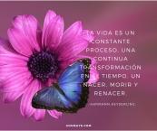 flower&farfalle-3