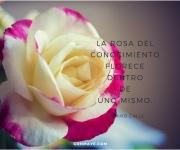 flower&knowledge